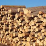 Gradnja z lesom